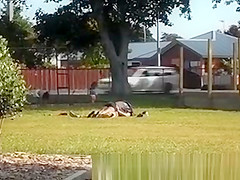 couple making out in park