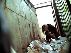 Girls Pissing voyeur video 238